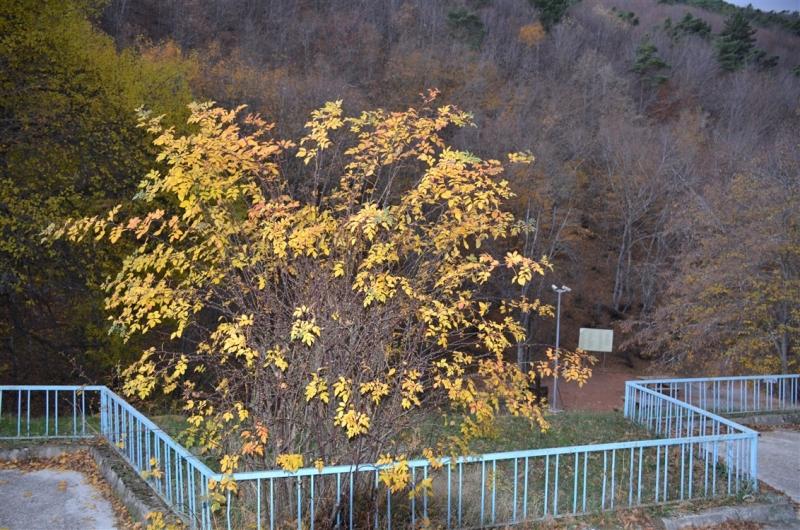 Boraboy'dan sonbahar fotoğrafları