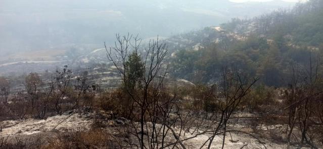 Taşova Orman İşletme Osmaniye Kadirli de