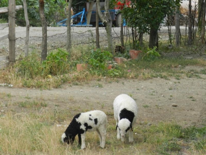 Çambükü köyü fotoları