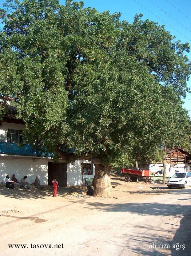 Dutluk köyü