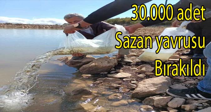 Şehit Himmet Aydemir Sulama Göletimize 30.000 adet sazan yavrusu