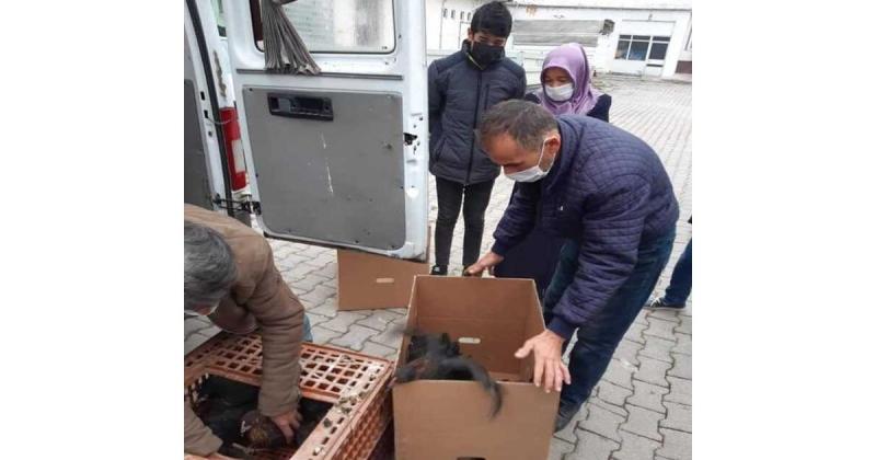 60 Aileye Toplamda 1800 Adet Tavuk Desteği Verildi