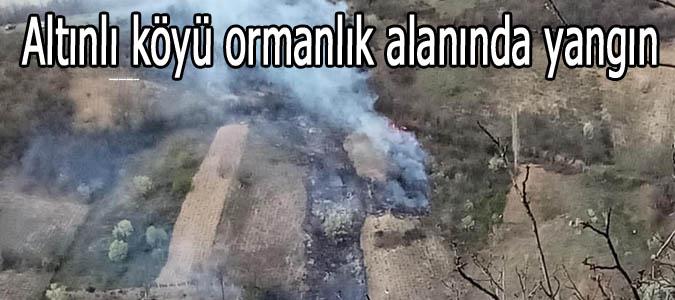 Altınlı köyü ormanlık alanında yangın