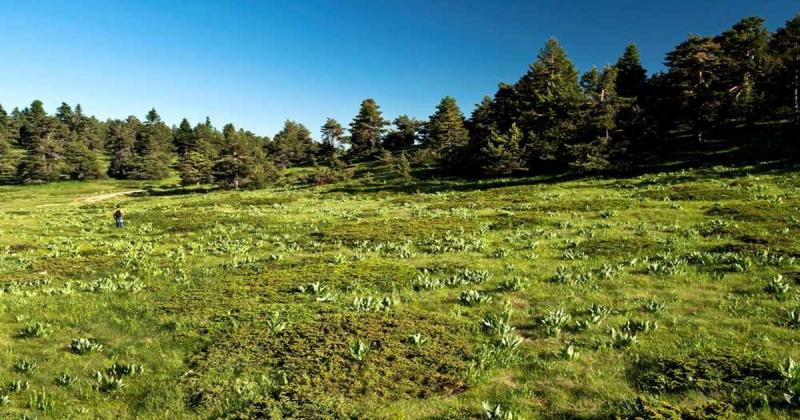 Amasya, Bolu ve Trabzon'da Yaylalar İmara Açılacak