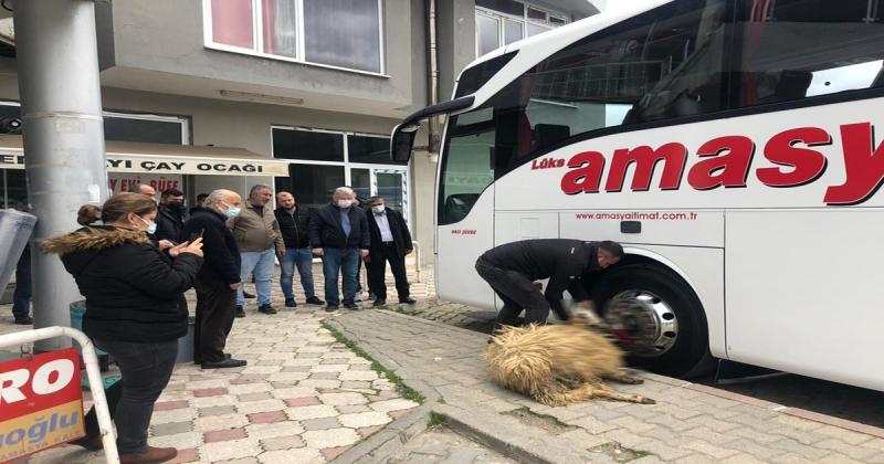 Amasya İtimat Araç Filosuna Yeni Bir Otobüs Kattı