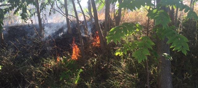 Anız yangınları yol kenarında bulunan ağaçlara zarar veriyor