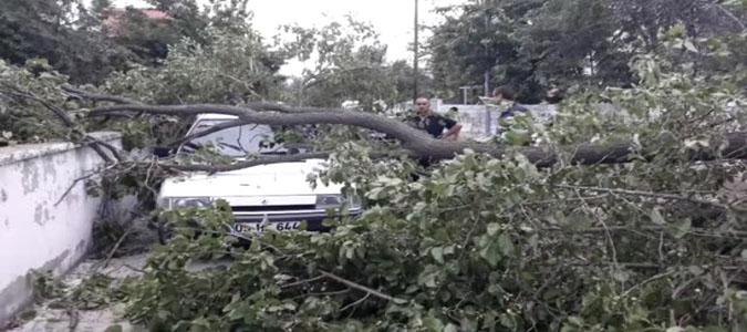 Aracın üzerine ağaç devrildi.