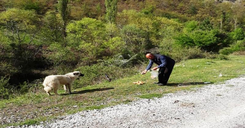 Boraboy Muhtarı İzzet Öz Köy Çevresinde ki Hayvanlara Sahip Çıkıyor