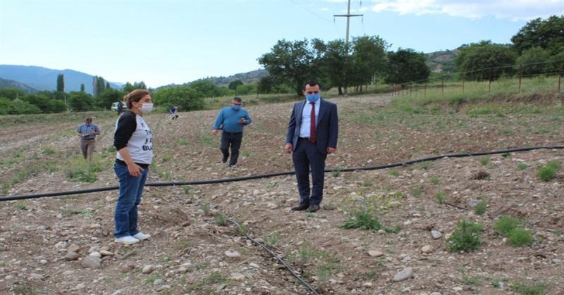 Kaymakam Çelik Mercimek Köyündeki Lavanta Üretim Alanını Ziyaret Etti