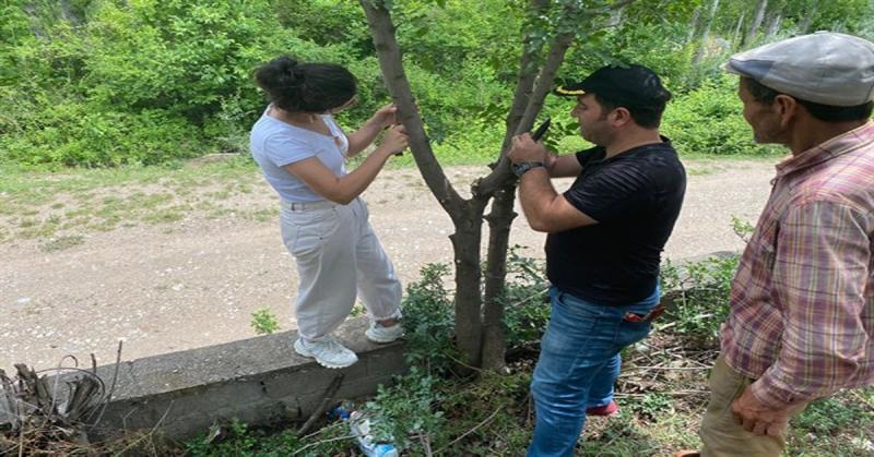 Morkan; 'Taşova'da Yabani Menengiç'te Antep Fıstığı Yetiştireceğiz'