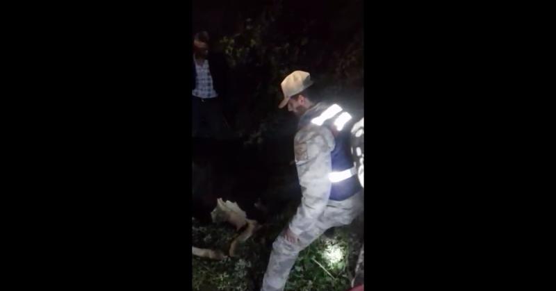 Sulama Kanalına Düşen Hayvan Jandarma Tarafından Kurtarıldı