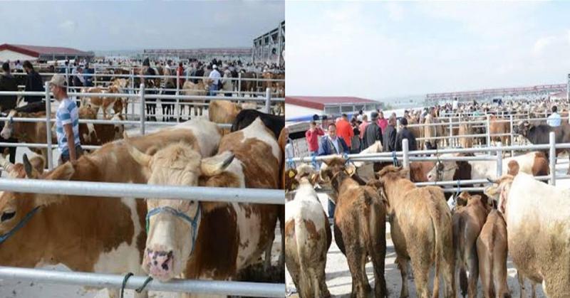Taşova Hayvan Pazarı Tekrar Açıldı