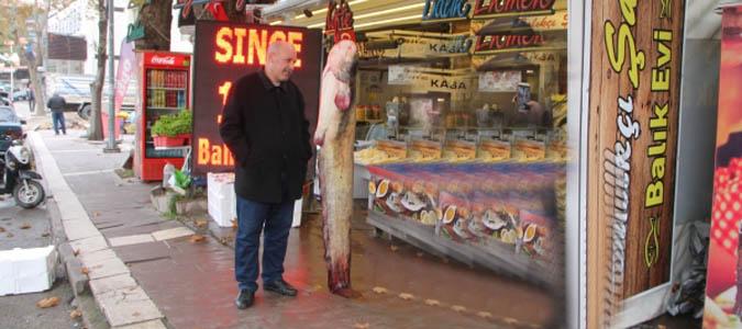 Taşova'da 2 metrelik yayın balığı tutuldu