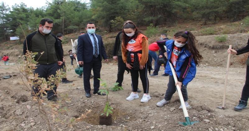 Taşova'da 5 Bin Fidan Toprakla Buluştu