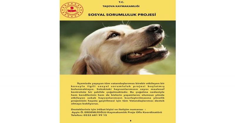 Taşova'da Sokak Hayvanlarını Kısırlaştırma Kampanyası