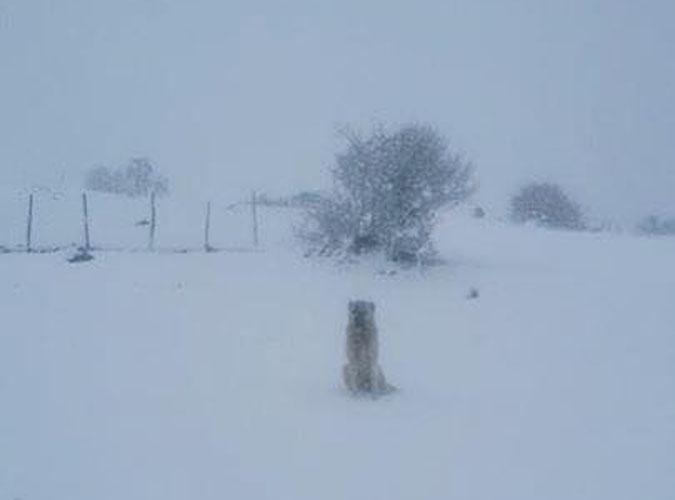 Taşova'ya yılın ilk karı yağdı
