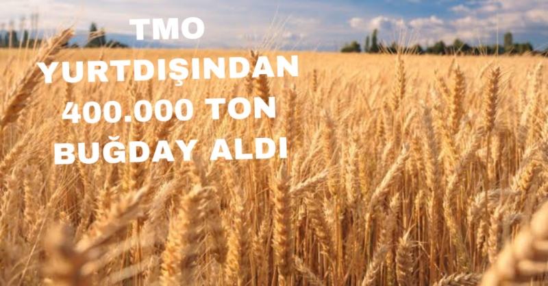 TMO Yurtdışından 400.000 ton buğday İtal edecek