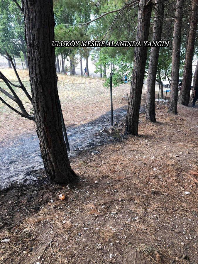 Uluköy Mesire Alanında Yangın
