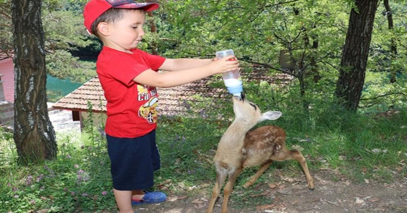 Yavru Karaca Boraboy Gölü Tabiat Parkı'nın İlgi Odağı Oldu