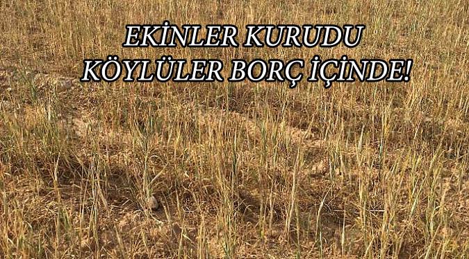 Ekinler Kurudu Köylüler Borç içerisinde...