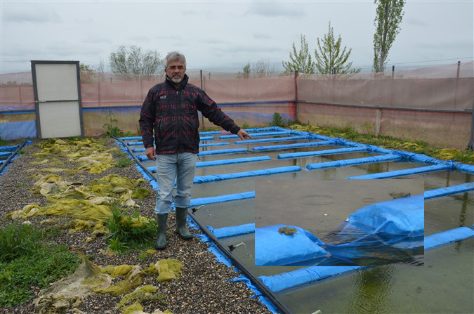 Emekli Oldu Kurbağa Çiftliği Kurdu Şimdi İhracata Hazırlanıyor!