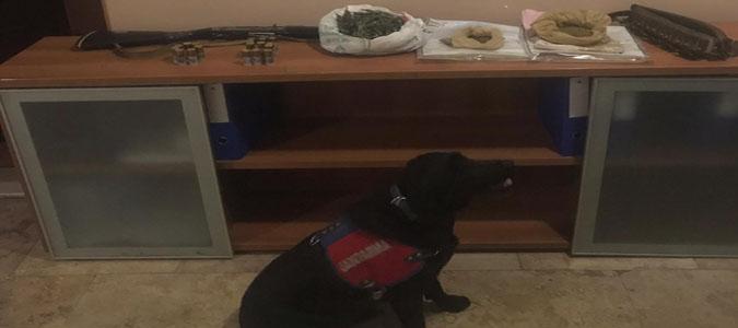 Taşova Jandarma'dan Uyuşturucu Operasyonu