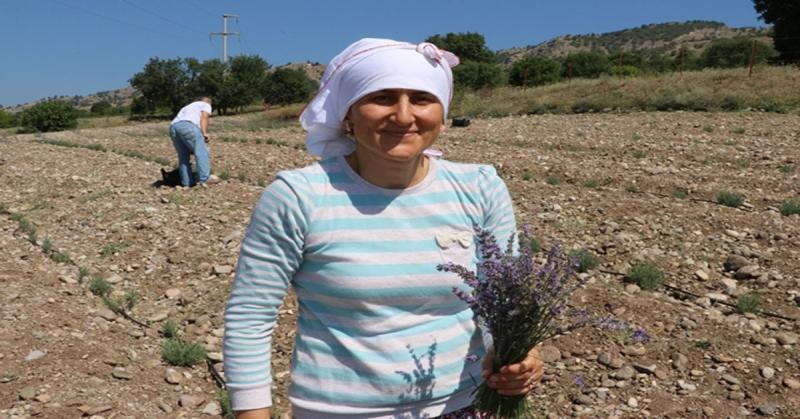 Taşova'daki Mor Tarlada İlk Lavanta Hasadını Yaptı