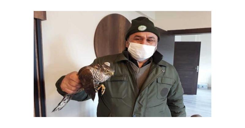 Yaralı Atmaca  Milli Parklar Müdürlüğü Ekiplerine Teslim Edildi